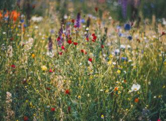 Mniej koszenia, więcej łąk kwietnych. Park Śląski stawia na bioróżnorodność