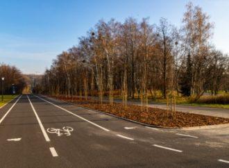 Rewitalizacja zieleni w Parku Śląskim
