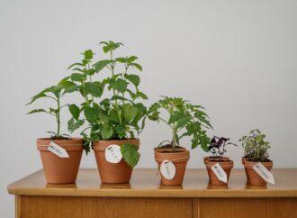 Drugie życie dla roślin. W SDK powstanie Punkt adopcji roślin