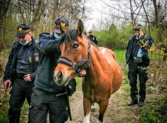 Straż Miejska odstawiła konia do domu