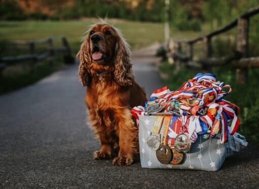 Wyjątkowe wydarzenie sportowe. Pobiegnij razem ze swoim… psem