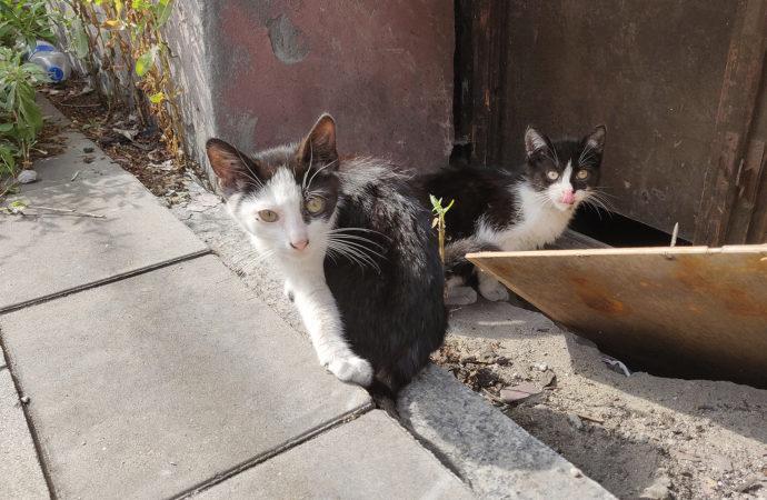 Chorzowski pakiet dla dzikich kotów