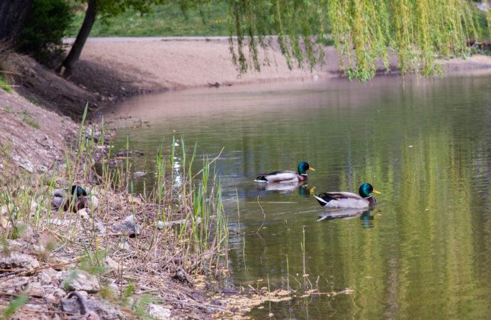 Spacer ornitologiczny po Parku Śląski