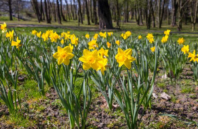 Plenerowa impreza dla miłośników przyrody i zagadek. Powitanie wiosny w Parku Śląskim