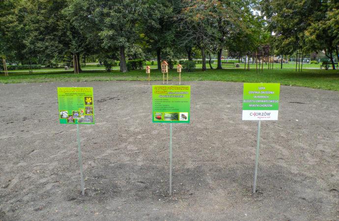 W trosce o bioróżnorodność. W centrum miasta powstaje łąka kwietna