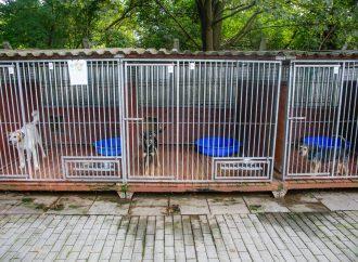 """Uwaga właściciele psów! Kiełbasa z groźną """"wkładką"""" w rejonie Schroniska"""