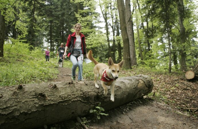 Park Śląski będzie areną Pucharu Polski w Dogtrekingu