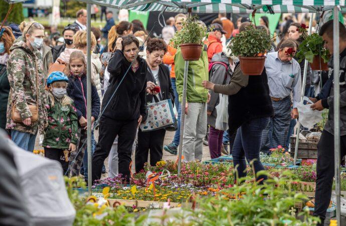 Park Śląski z propozycją dla miłośników roślin. Od piątku rusza Parkowy Kiermasz Kwiatowy